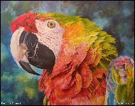 Karolína Borecká - Macaw, painting, acrylic paints on canvas